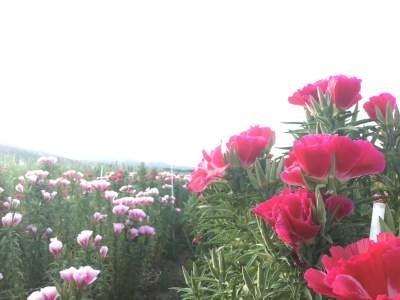 農場の花はとてもきれいです。花はきれいなんですけど…。